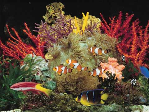 A Beautiful Custom Seascapes Aquarium